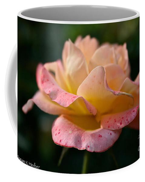 Plant Coffee Mug featuring the photograph Day Breaker Floribunda by Susan Herber