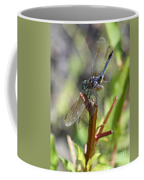 Dragonfly Coffee Mug featuring the photograph Daydreamer by Carol Groenen