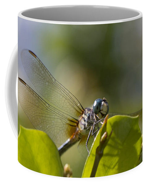 Libellula Vibrans Coffee Mug featuring the photograph Dazzling Blue Skimmer by Kathy Clark
