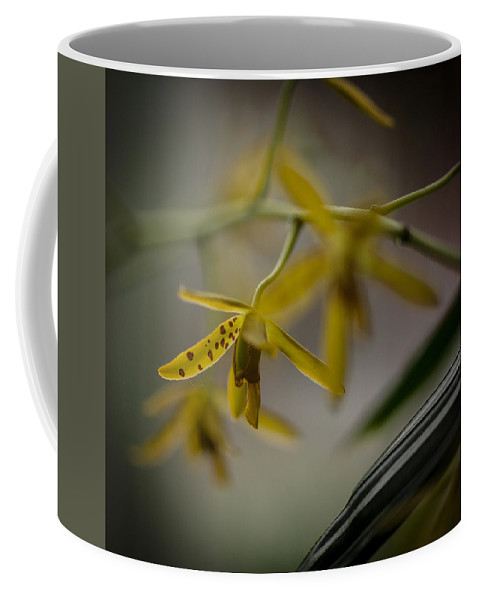 Orchid Coffee Mug featuring the photograph Delicate Edge by Mike Reid