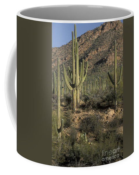 Sandra Bronstein Coffee Mug featuring the photograph Desert Guardians by Sandra Bronstein