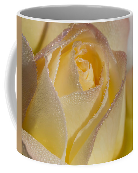 Rose Coffee Mug featuring the photograph Dew Bejeweled Peace Rose by Kathy Clark