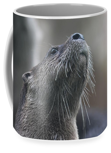 Otter Coffee Mug featuring the photograph Distraction by Joan Kerns