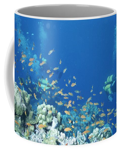 Red Sea Coffee Mug featuring the photograph Divers Enjoy The Beauty Of The Reefs by Carsten Peter