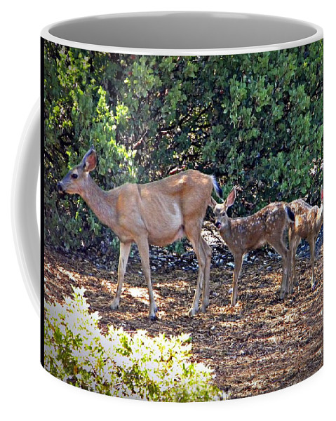 Deer Coffee Mug featuring the photograph Doe And Twin Fawns by Frank Wilson