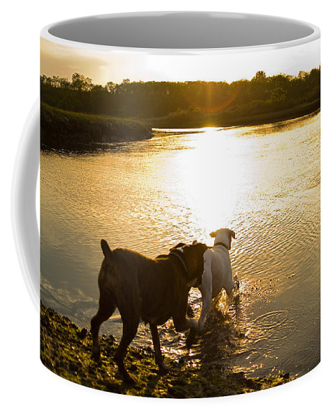 Boxer Coffee Mug featuring the photograph Dogs At Sunset by Stephanie McDowell
