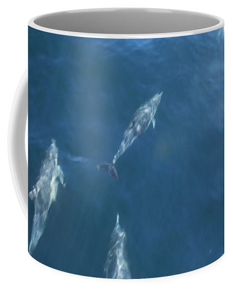 North America Coffee Mug featuring the photograph Dolphins Swimming In Bay With Sun by Todd Gipstein