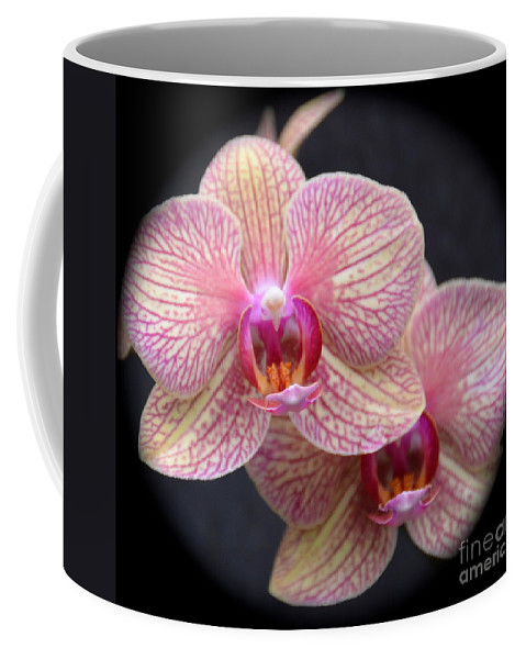 Orchids Coffee Mug featuring the photograph Double Trouble by Debbi Granruth