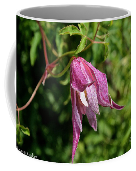 Outdoors Coffee Mug featuring the photograph Downy Clematis by Susan Herber