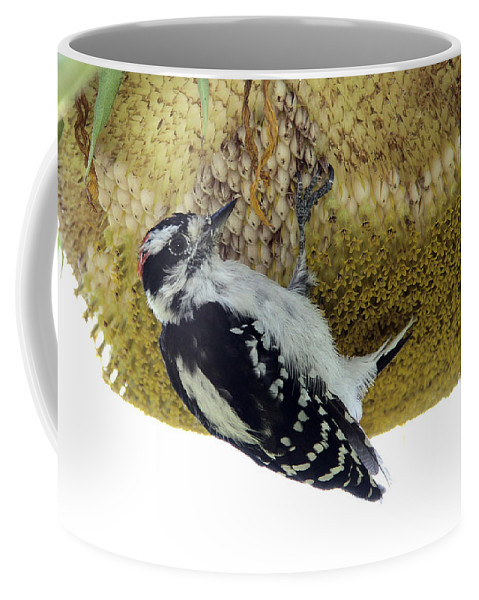 Downy Woodpecker Coffee Mug featuring the photograph Downy Woodpecker On Sunflower by Doris Potter