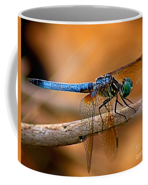 Animals Coffee Mug featuring the photograph Dragon Fly by Nick Zelinsky
