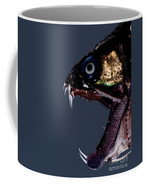 Dragonfish Coffee Mug featuring the photograph Dragonfish Mouth by Dant� Fenolio