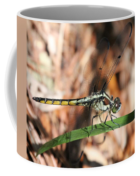 Dragonfly Coffee Mug featuring the photograph Dragonfly Closeup by Laurel Talabere