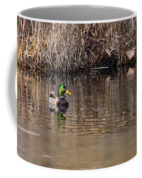Usa Coffee Mug featuring the photograph Drake In The Pond by LeeAnn McLaneGoetz McLaneGoetzStudioLLCcom