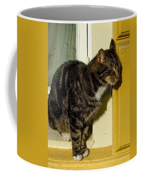 Cat Coffee Mug featuring the photograph Dreaming Cat by Hakon Soreide