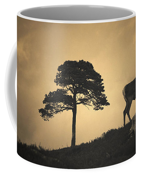 Red Deer Silhouette Coffee Mug featuring the photograph Dreaming Of Tomorrow by Gavin Macrae