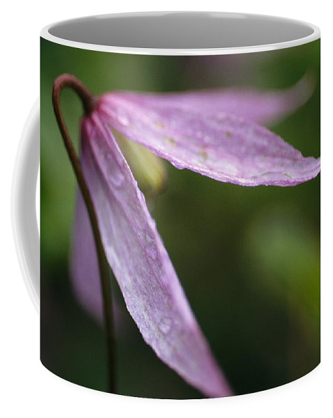 North America Coffee Mug featuring the photograph Droplets Of Dew On A Pink Wildflower by Michael Melford