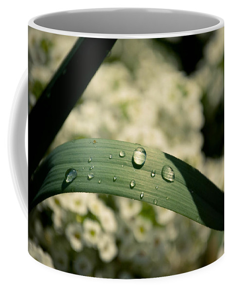 Leaves Coffee Mug featuring the photograph Droplets by Trish Tritz