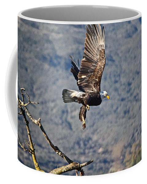 Birds Coffee Mug featuring the photograph Eagle's Wings by Diana Hatcher