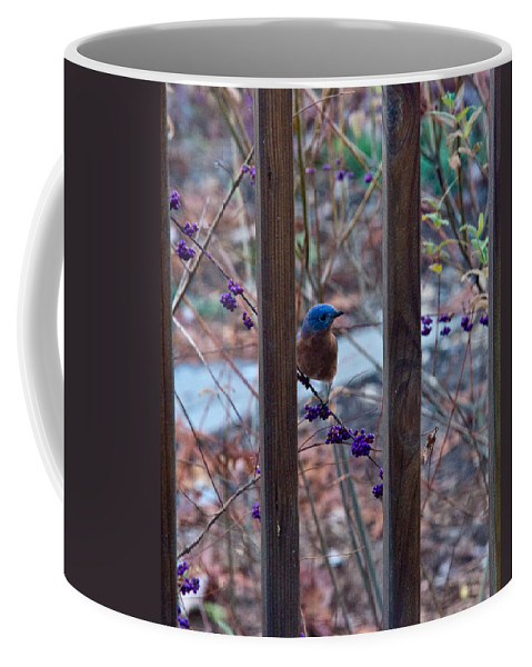 Eastern Coffee Mug featuring the photograph Eastern Bluebird Between The Bars by Douglas Barnett