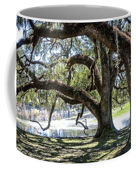 Oak Coffee Mug featuring the photograph Edge Of The Green Swamp by Carol Bradley