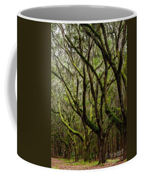 Oak Tunnel Coffee Mug featuring the photograph Eerie Oaks Wormsloe Plantation Savannah Georgia by Dawna Moore Photography