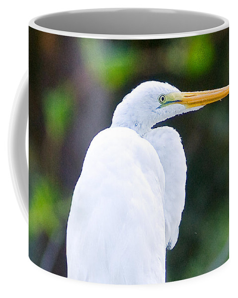 Preening Coffee Mug featuring the photograph Egret Preening by Scott Hansen