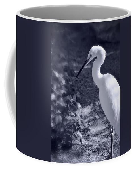 Snowy Egret Coffee Mug featuring the photograph Elegance by Saija Lehtonen