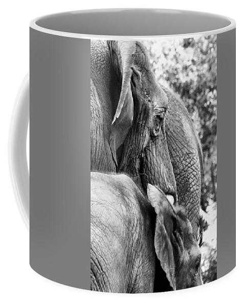 African Elephant Coffee Mug featuring the photograph Elephant Ears by Angela Rath