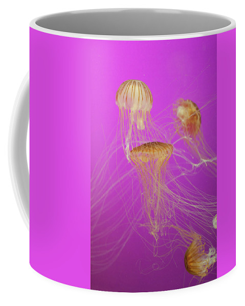 Jellyfish Coffee Mug featuring the photograph Enchanted Jellyfish 1 by Pam Fong