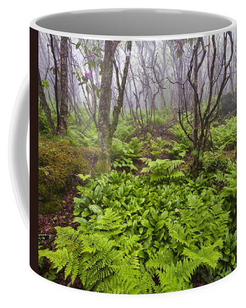 North Carolina Coffee Mug featuring the photograph Enchanted Woodland Forest In Fog Blue Ridge Parkway In North Carolina by Bill Swindaman