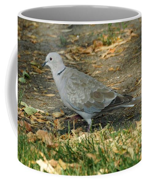 Birds Coffee Mug featuring the photograph Eurasian Dove by Lori Tordsen