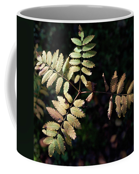 Lehtokukka Coffee Mug featuring the photograph European Rowan by Jouko Lehto
