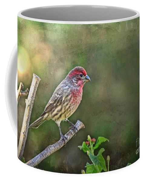 Nature Coffee Mug featuring the photograph Evening Finch Blank Greeting Card by Debbie Portwood