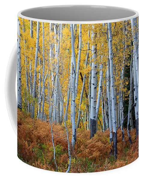 Autumn Colors Photograph Coffee Mug featuring the photograph Evening Gold by Jim Garrison