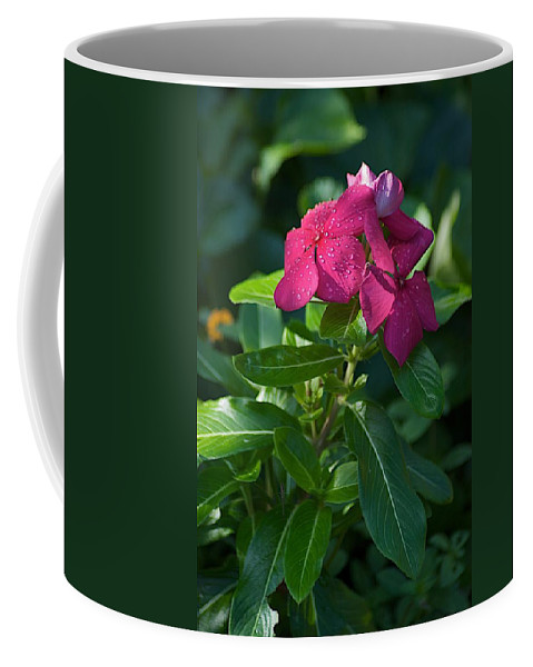 Flower Coffee Mug featuring the photograph Ever So by Joseph Yarbrough