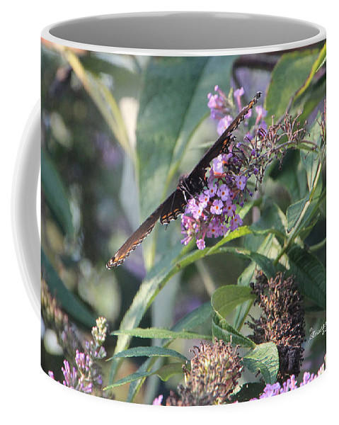 Butterfly Coffee Mug featuring the photograph Ever Wonder Where Jet Designers Get Their Ideas by Ericamaxine Price
