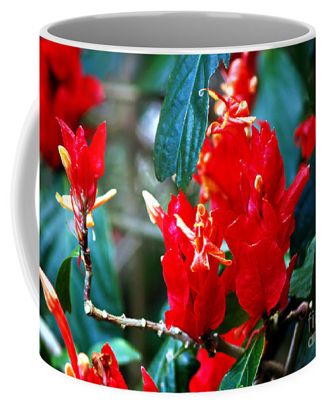 Fine Art Print Coffee Mug featuring the photograph Excitement by Patricia Griffin Brett