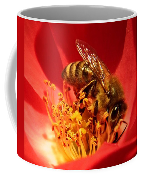 Bee Coffee Mug featuring the photograph Eye Contact by Chris Berry