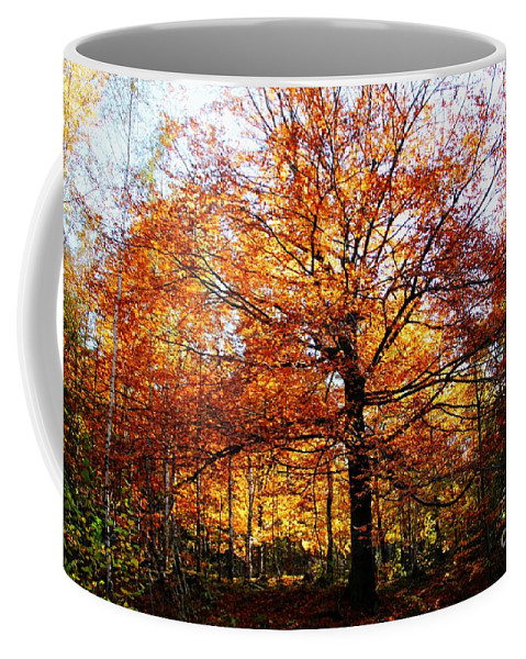 Eye Of The Forest Coffee Mug featuring the photograph Eye Of The Forest by Mariola Bitner