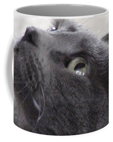Cats Coffee Mug featuring the photograph Eye On The Prize by Amber Lena