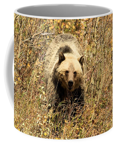 Grizzly Bear Coffee Mug featuring the photograph Eyes On You by Adam Jewell