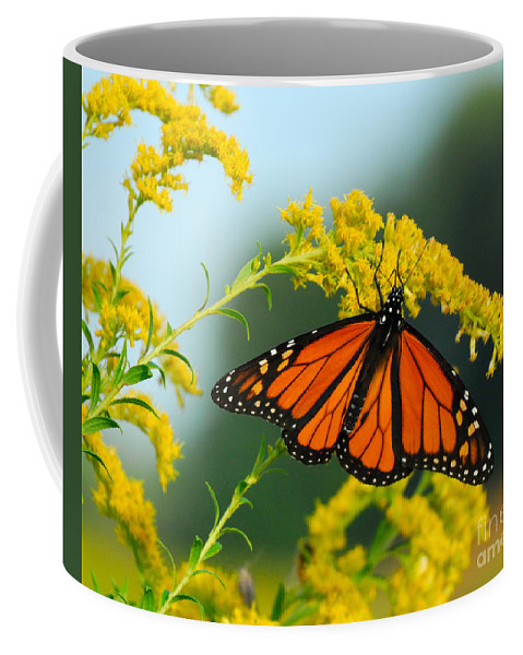 Fall Coffee Mug featuring the photograph Fall Colour by Craig Leaper