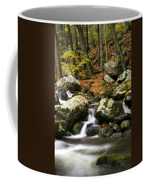 Autumn Coffee Mug featuring the photograph Fall Stream by Darren Fisher