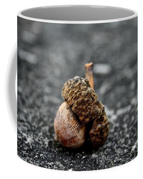 Outdoors Coffee Mug featuring the photograph Fallen Acorn by Susan Herber
