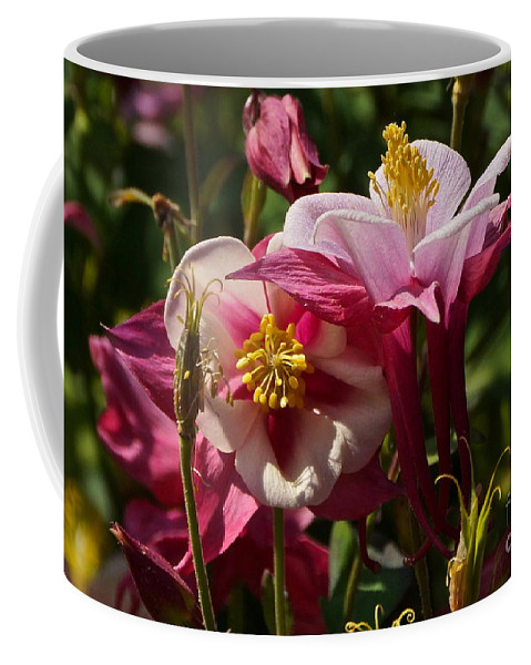 Fan Columbine Coffee Mug featuring the photograph Fan Columbines by Byron Varvarigos