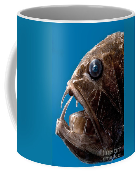 Fangtooth Coffee Mug featuring the photograph Fangtooth by Dante Fenolio