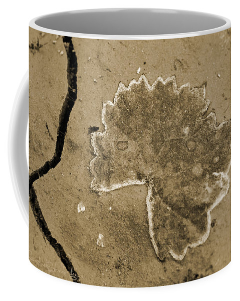 Leaf Coffee Mug featuring the photograph Faux Fossil by Christine Stonebridge