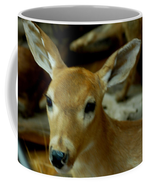 Usa Coffee Mug featuring the photograph Fawn by LeeAnn McLaneGoetz McLaneGoetzStudioLLCcom