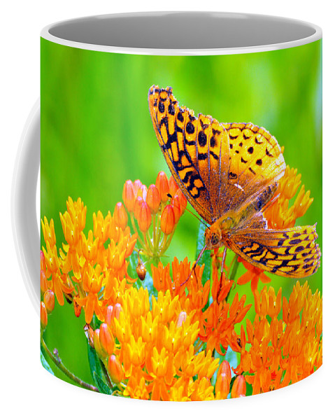 Butterfly Coffee Mug featuring the photograph Feeding Butterfly by Paul Ward
